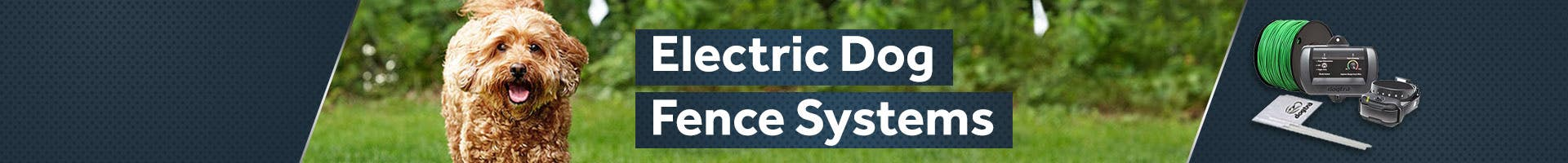 Electric Dog Fences
