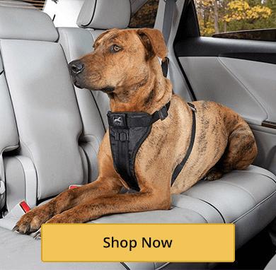 Dog Car Harnesses