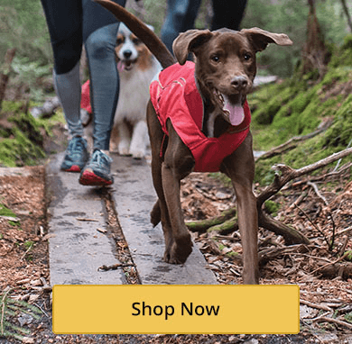 Dog Adventure Harnesses