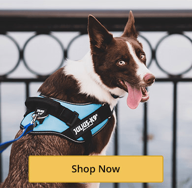 Everyday Dog Harnesses