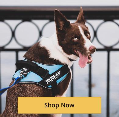 Everyday Dog Harnesses