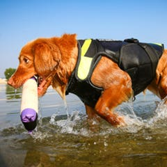 Julius K9 Swimming and Rehabilitation Dog Harness