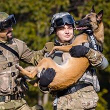 Camouflage Julius K9 IDC Powerharness Dog Harness on working dog
