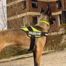Julius K9 IDC Powerharness Dog Harness on working dog