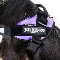 Julius K9 Purple IDC Powerharness Dog Harness