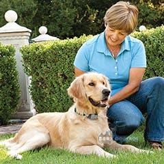 Petsafe Big Dog Collar