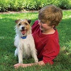 Petsafe Deluxe Little Dog