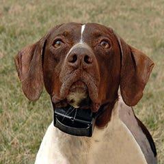 Sportdog 10R