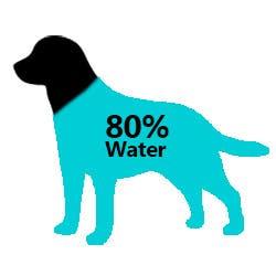 Dog 80% Water