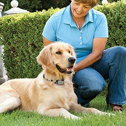 PetSafe Anti-Bark Spray Collar - PBC22-14130