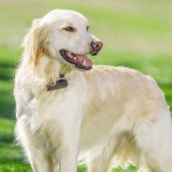PetSafe Standard Dog Fence - PRF-3004W