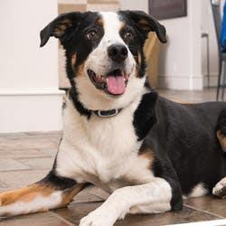 PetSafe Little Dog Remote Trainer - PDT17-13471