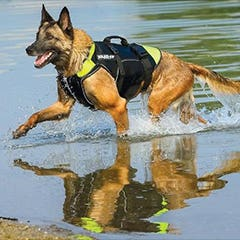 Julius K-9 Swimming and Therapy Harness