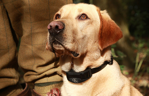 What to Look for when Purchasing a Remote Training Collar