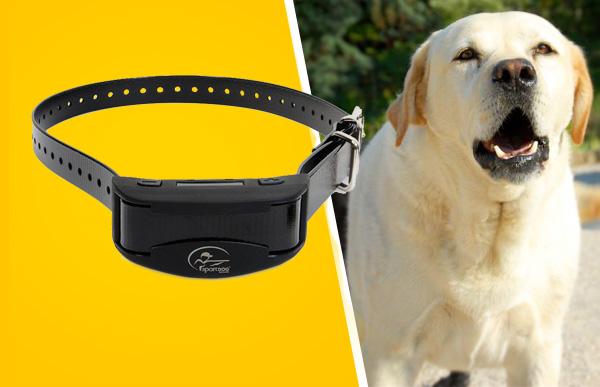 Bark Collar Basics