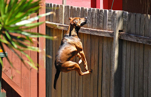 3 Reasons why your Dog Might be Escaping