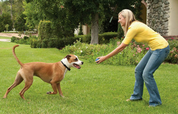 Why do I need to train my dog to use an Electric Dog Fence?