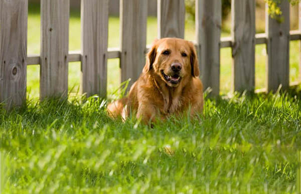 Do you have an escaping dog?  Here are the available solutions.