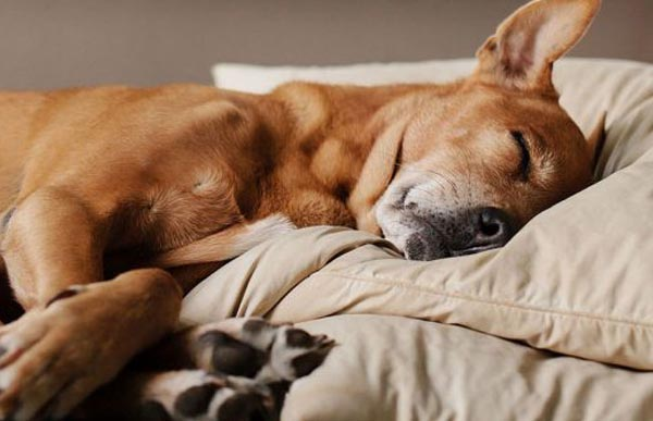 How much sleep do dogs really need?