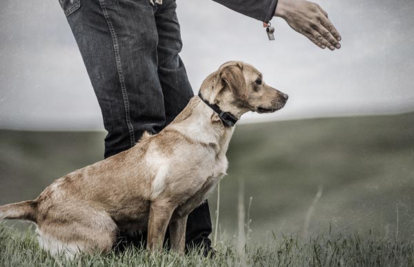 How to Find the Right Level on a Remote Training Collar to Best Suit your dog