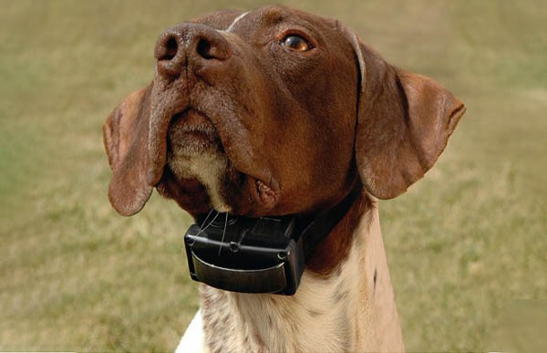 Dog Barking Collars - How to fit one properly