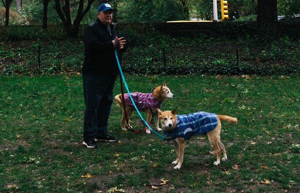 How to look after 'Outdoor Dogs' in Winter