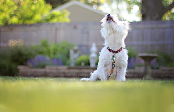 How to Stop a Dog Barking - An Overview