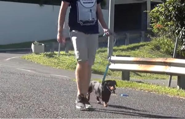 Loose-leash walking thanks to a Remote Dog Training Collar