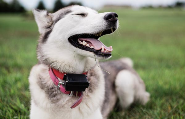 My Siberian Husky likes to howl. Which Bark Collar is going to work?