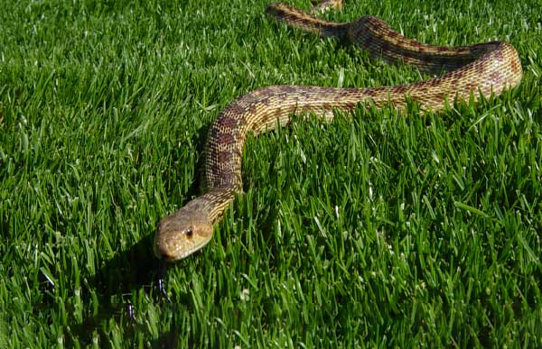 Snake attacks on the rise as Summer kicks in early