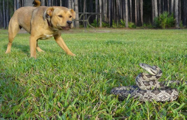 Summer dog dangers are here - What you can do for your dog!