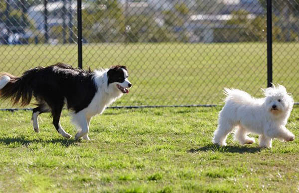The local dog park: does your dog need it?