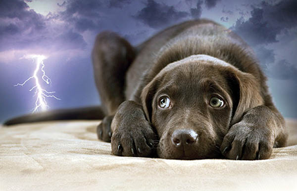 Thunderstorms, Fireworks and your dog