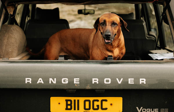Travelling with your dog: What's the law?