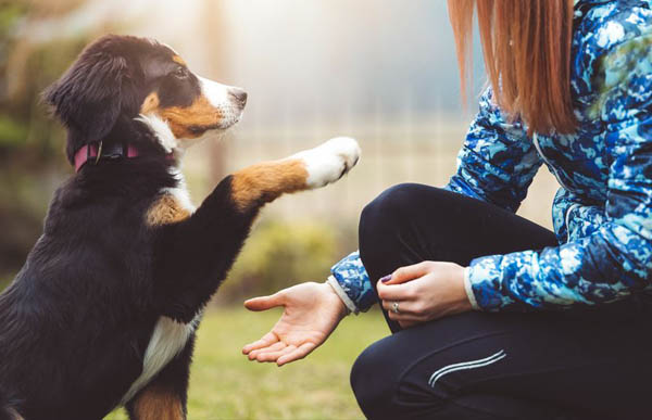 When to start training your puppy plus essential skills for all dogs